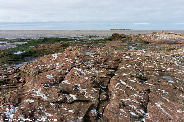 Bird droppings from a high tide roost on the Hilbre islands, Wirral