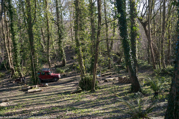 Landrover in woodland